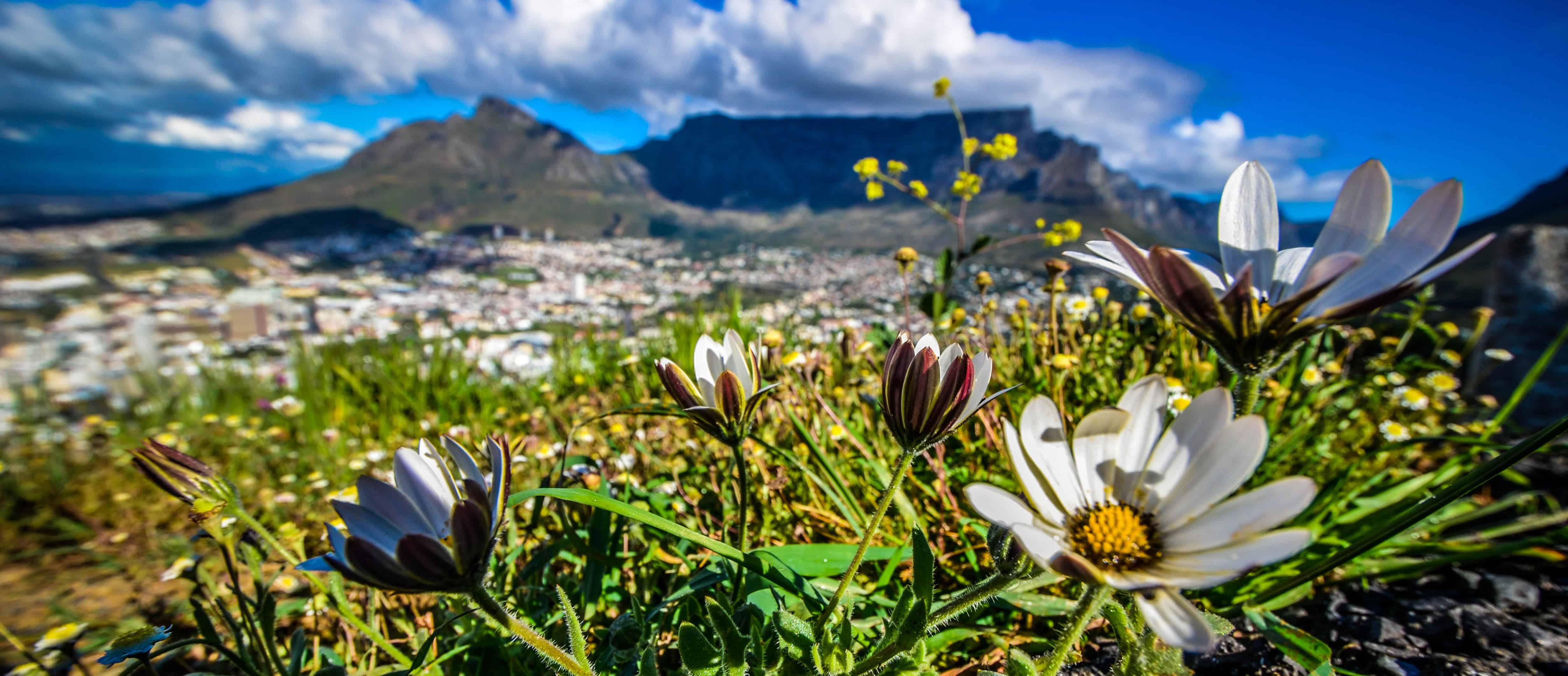 Home Chevron Right See And Do Nature Adventure Flora Discover Fynbos In Cape Town