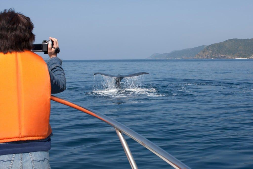 Whale_watching_in_cape_town