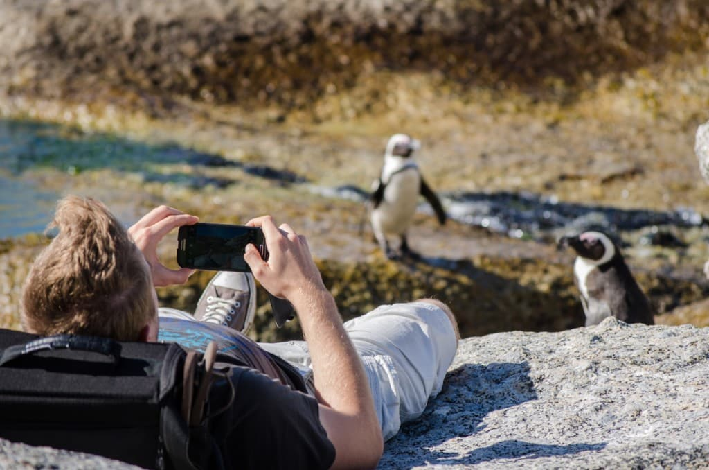 a tourist taking a photo of penguins at Boulders beach