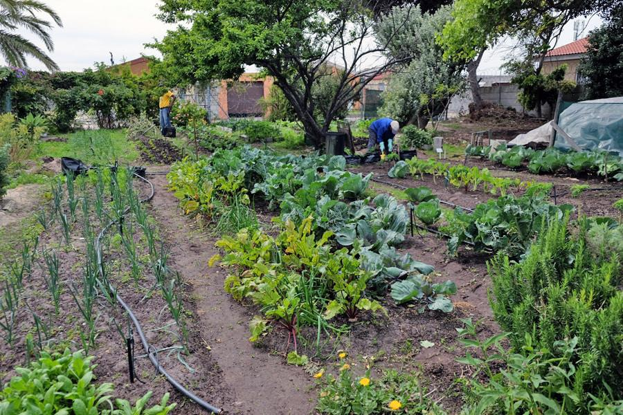 A Khayelitsha Garden planted by Juma and visitors on his tour
