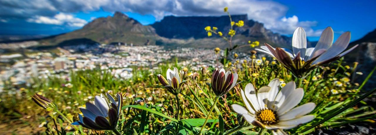 Top Attractions - Table Mountain - CTT_Table Mountain_(c)Lisa Burnell (12).jpg