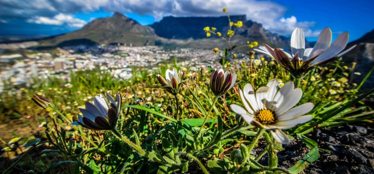 What's on in Cape Town this month