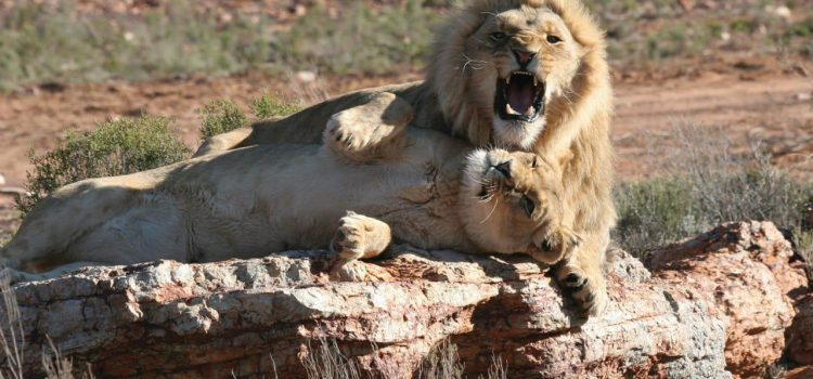 Safari Experiences Near Cape Town