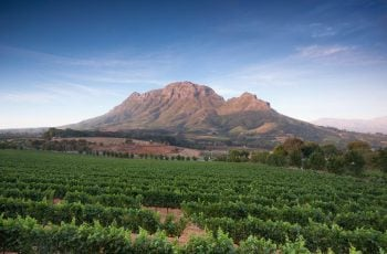 Stellenbosch Wine Routes