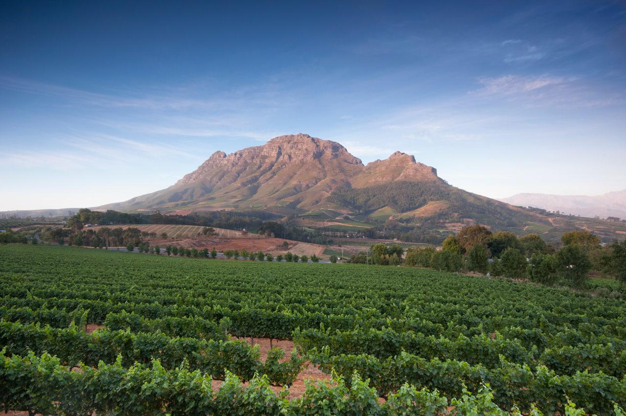 Stellenbosch vineyard Cape Town
