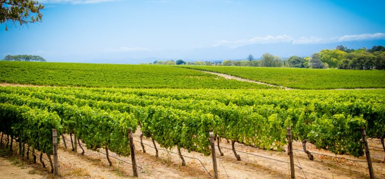 Celebrate these special wine dates with Groot Constantia
