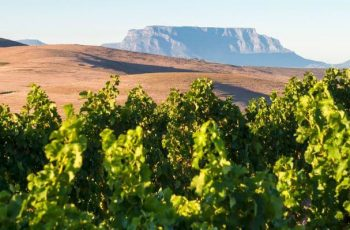 The Durbanville Wine Valley