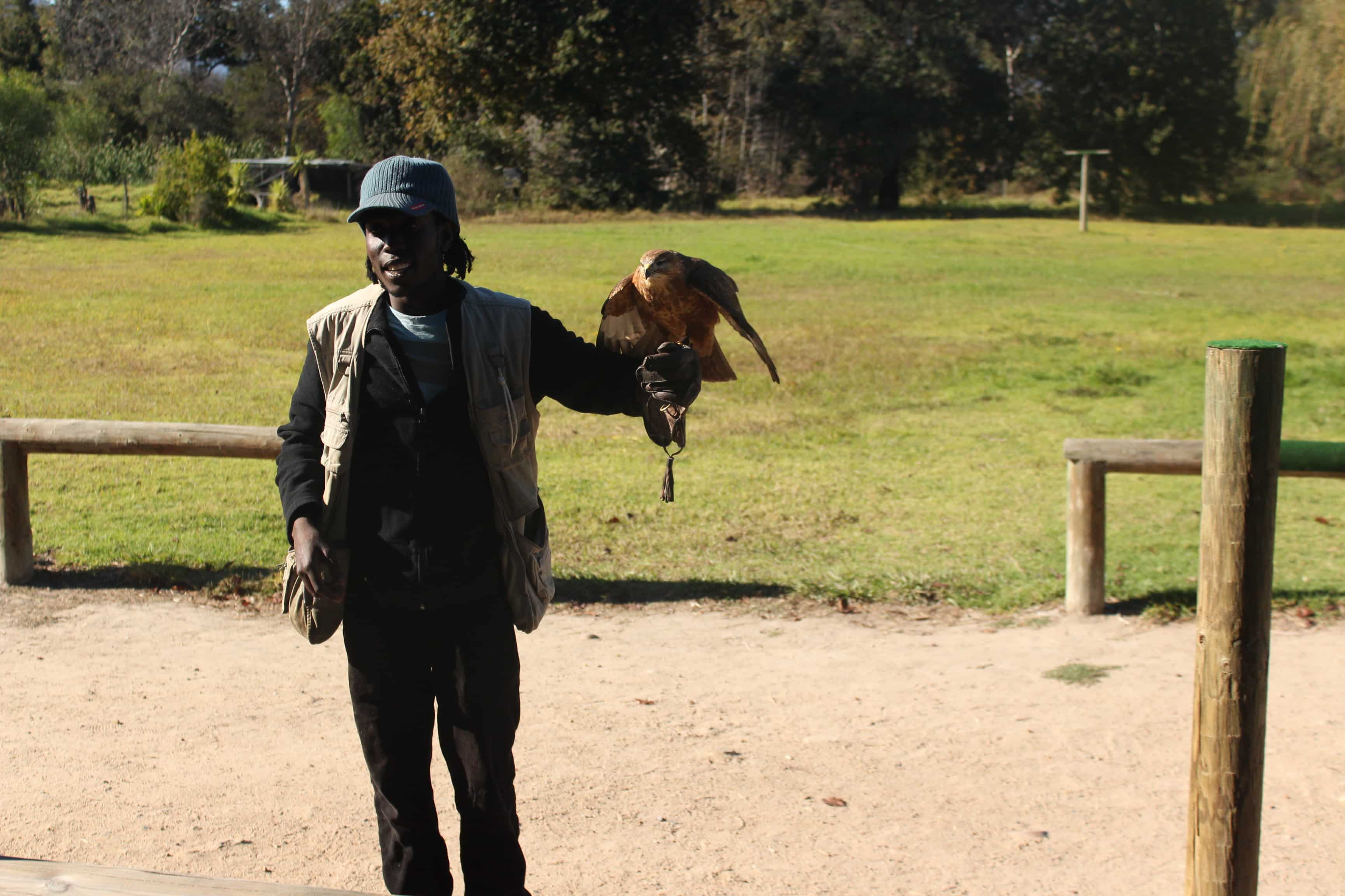 Hawk handler at Spier