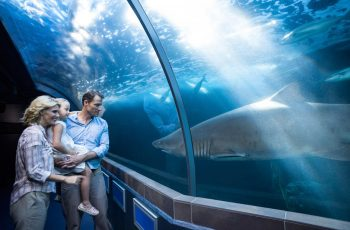 Six reasons to take a mid-year family vacation in Cape Town