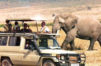 African Tip Tours