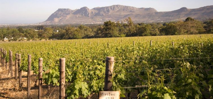 Three world-class wine routes within Cape Town