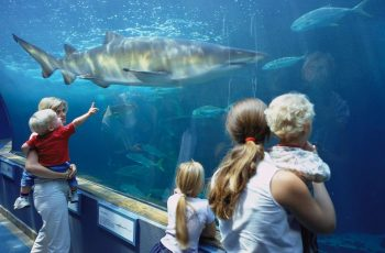 Animal encounters for kids in Cape Town