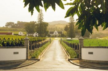 The history of wine in Cape Town