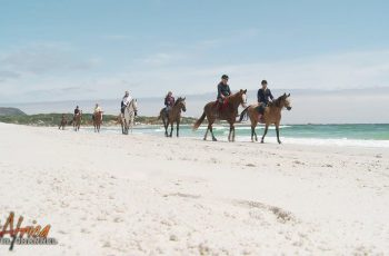 Beach Outride from Imhoff Equestrian Centre