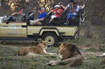 Lion of Africa Travel