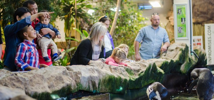 Things to do at the Two Oceans Aquarium