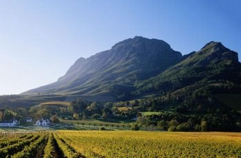 Taste the Cape Travel and Tours