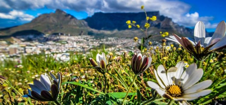 5 fantastic day trips from Cape Town