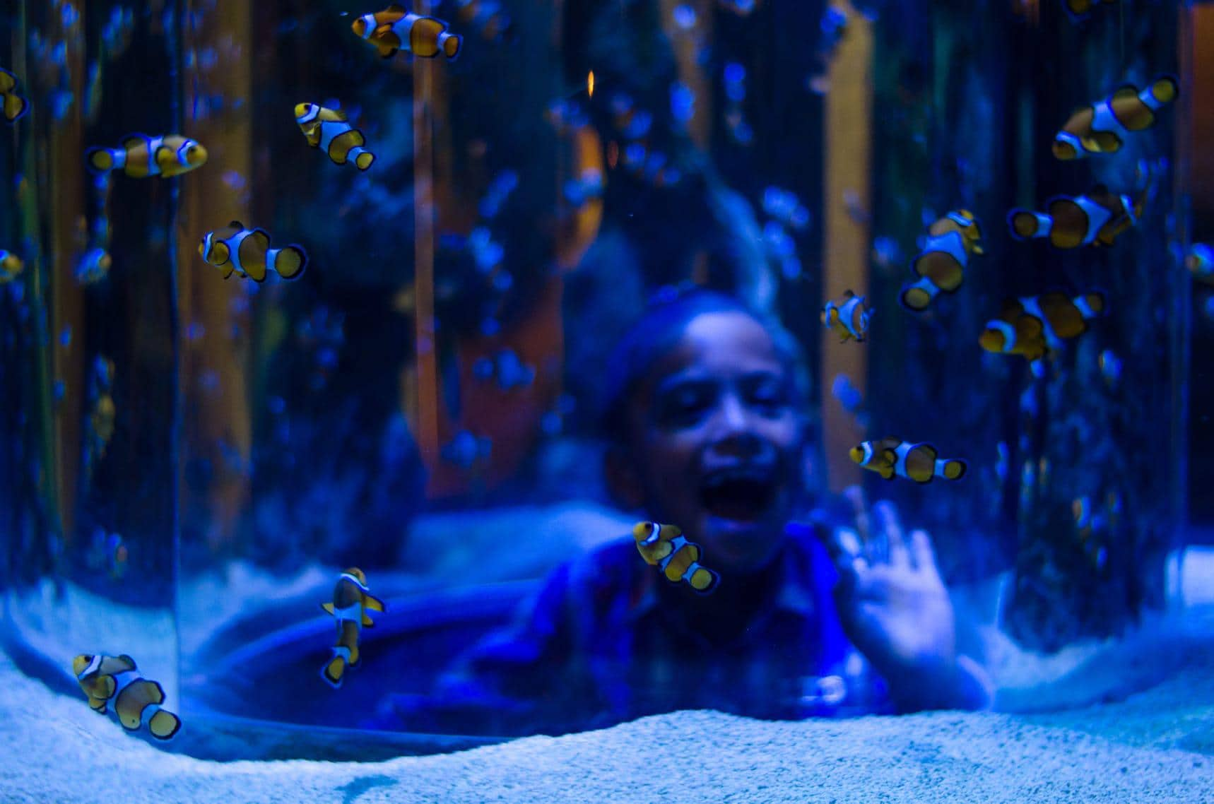 Top Attractions - VA Waterfront - Aquarium - CTT__Aquarium_(c)Lisa Burnell (55).jpg (1)