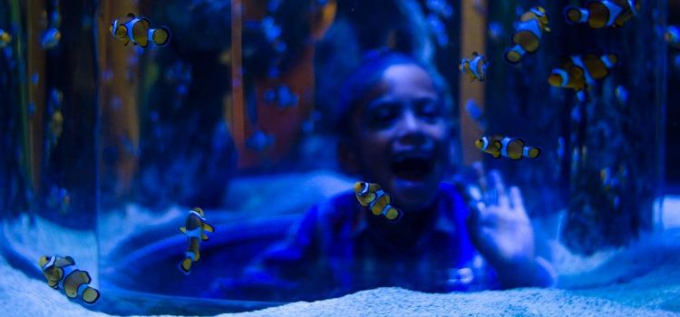 Things to do with kids this summer in Cape Town