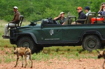 Unparalleled South African Tours