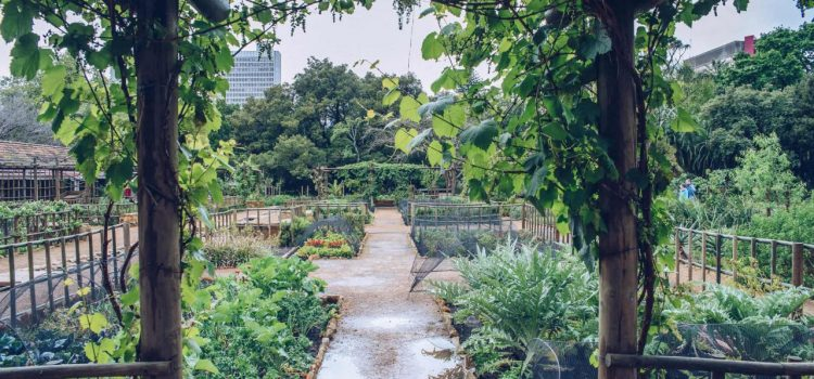 Six reasons to visit the Company's Garden
