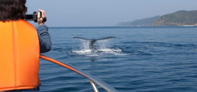 Whale watching in Cape Town: All you need to know!