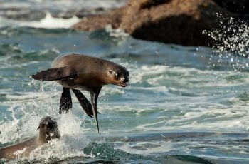 Snorkel with Seals: Cape Town Bucket List