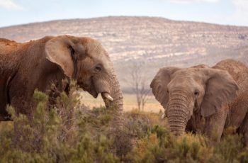 Luxury Experiences at Aquila Private Game Reserve and Spa
