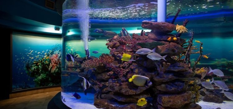 Holiday fun and prizes at Two Oceans Aquarium