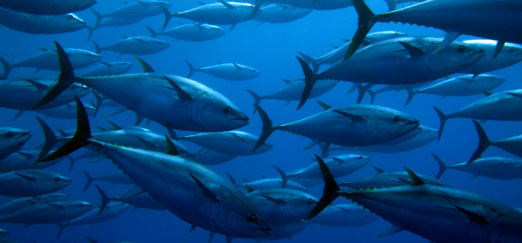 Five ways to help the oceans from your kitchen