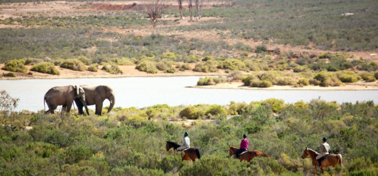 Enjoy an Aquila safari getaway at never-to-be-repeated rates